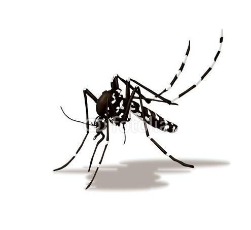 20160801 - zanzara